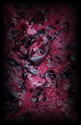 Fermentación de uva