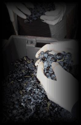 Mesa de selección de uva